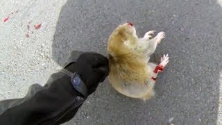 Download BIKER TRYING TO HELP DYING ANIMAL   BIKERS ARE NICE   Bikers Helping People & Animals   [Ep.#17] Video