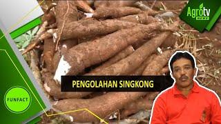 Download PENGOLAHAN SINGKONG Video