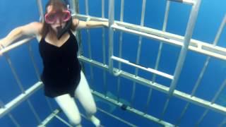 Download Shark Cage Dive Hawaii North Shore HD Video