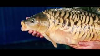 Download The Life of a Fish Farmer - Team Korda Video