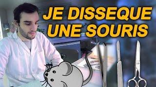 Download JE DISSÈQUE UNE SOURIS ! SciVlog #5 Video