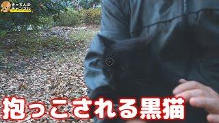 Download 【野良猫】抱っこされる黒猫【地域猫】 Video