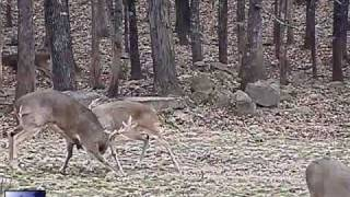 Download Two Monster Bucks in an epic battle Video