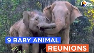 Download 9 Animals Reunited With Their Babies: Animal Reunion Compilation | The Dodo Daily Video