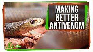 Download Making Antivenom out of Human Antibodies | SciShow News Video