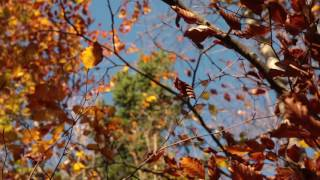 Download Wind Sounds 1 Hour / Wind Blowing Through Autumn Forest Video