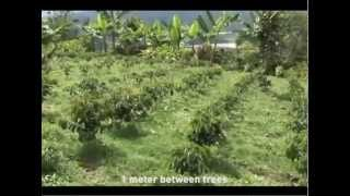 Download Coffee Production Process Video