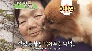 Download 매일 포메를 업고 다니는 할머니의 사연.. Video