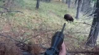 Download Bear Charge Video