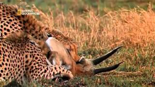 Download Worlds Deadliest Animal Planet on Earth Video