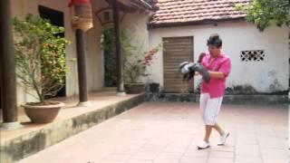 Download Trailer Hài xuân: Xuan hinh 2013. Đạo diễn: Phạm Đông Hồng Video