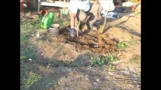 Download Ağaç fidanı toprağa nasıl dikilir ? Video
