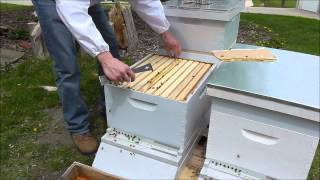 Download First Inspection of a New Hive Video