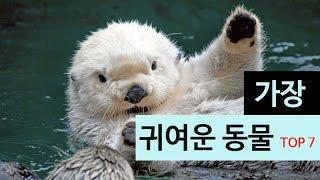Download (랭킹박스) 가장 귀여운 동물 TOP 7 Video
