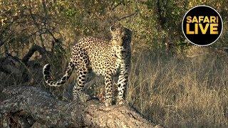 Download safariLIVE - Sunrise Safari - May 20, 2019 Video