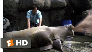 Download Vomiting Walrus - 50 First Dates (3/8) Movie CLIP (2004) HD Video