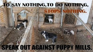 Download The Shocking Truth About Puppy Mills (Documentary in HD!!!) Video