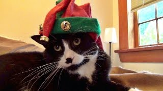 Download How To Celebrate Christmas Like A Cat Video