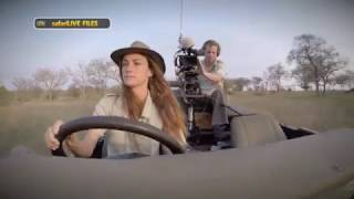 Download What it takes to bring you a LIVE safari from the middle of the African wilderness Video