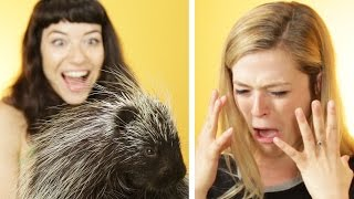 Download Animal Lovers Get Surprised With Porcupines Video
