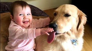 Download Golden Retriever Dog makes Baby laugh very happy | Dog loves Baby Compilation Video