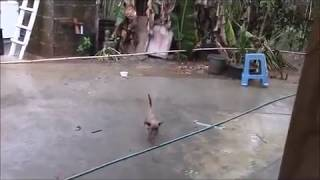 Download Rain Rain Rain Many Inches Today Everything Changing Philippines Expat Foreigner Video