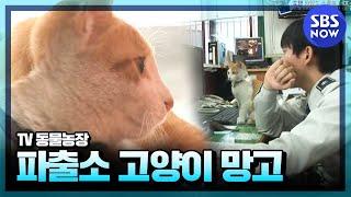 Download SBS [동물농장] - 망원경찰서의 망고경찰냥이 Video