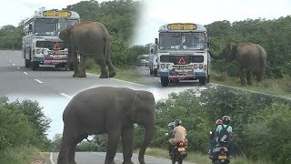 Download Wild elephant searching for food inside a bus ! Video