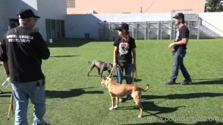 Download Dog to Dog Interaction and Corrections -Bound Angels University Video
