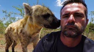 Download Hello Hyenas! | The Lion Whisperer Video