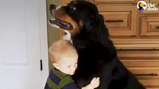 Download Kids and Dogs Growing Up Together | Animal Best Friend Compilation | The Dodo Daily Video