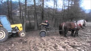 Download Konie zimnokrwiste pracują / Horse pulling Video
