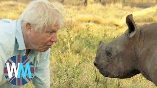 Download Top 10 David Attenborough Moments Video