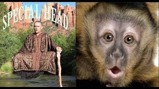 Download Monkey Boo Reacts To a Levitating Monk Video