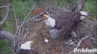 Download SWFL Eagles ~ Intruder Alert as M15 Delivers Another Fish to Nest 1.13.17 Video