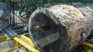 Download sawing old pine Video