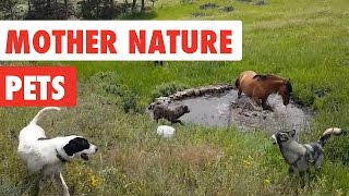Download Mother Nature Pets | Funny Pet Video Compilation 2017 Video