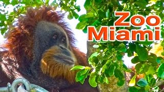Download Zoo Miami | Traveling Robert Video