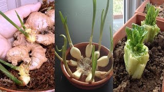 Download 8 Vegetables and Herbs You Can Re grow Again and Again Inside your House or Garden Video