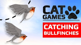 Download CAT GAMES - CATCHING BULLFINCHES (ENTERTAINMENT VIDEOS FOR CATS TO WATCH) 60FPS Video