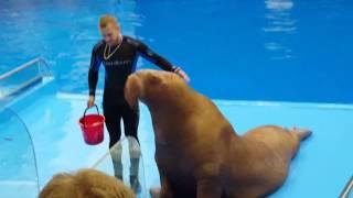 Download Дельфинарий в океанариум ездили Владивосток Video