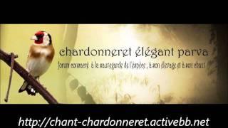 CHARDONNERET GRATUITEMENT CHANT TÉLÉCHARGER ALGERIEN MP3