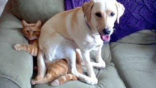 Download TRY NOT TO ROLL ON THE FLOOR LAUGHING - Funny ANIMAL compilation Video