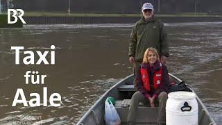Download Unterwegs mit Aal-Rettern vom Main: Taxi für bedrohte Tiere | Zwischen Spessart und Karwendel | BR Video