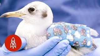 Download Inside Europe's Busiest (and Cutest) Wildlife Hospital Video