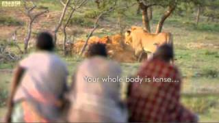 Download BBC - Men stealing meat from lions. Video