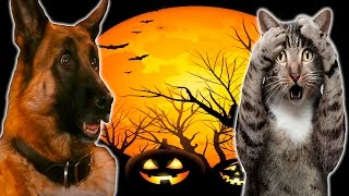 Download Funny Cats And Dogs Scared Of Halloween - Funny Cats And Dogs Video