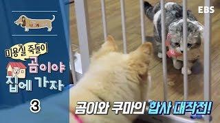 Download 세상에 나쁜 개는 없다 - 미용실 죽돌이 곰이야 집에 가자 #003 Video