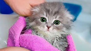 Download 8 LIFE HACKS FOR CAT! Video