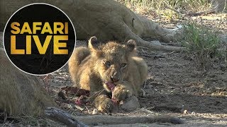 Download safariLIVE - Sunrise Safari - May 25, 2018 Video
